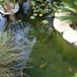 primer estanque - imagen 3
